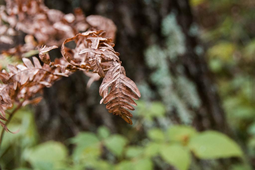 crusty-fern