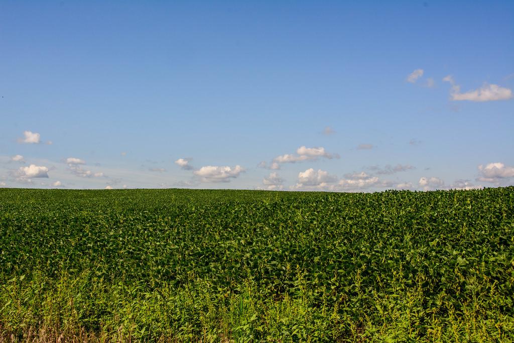 field-of-bean-dreams