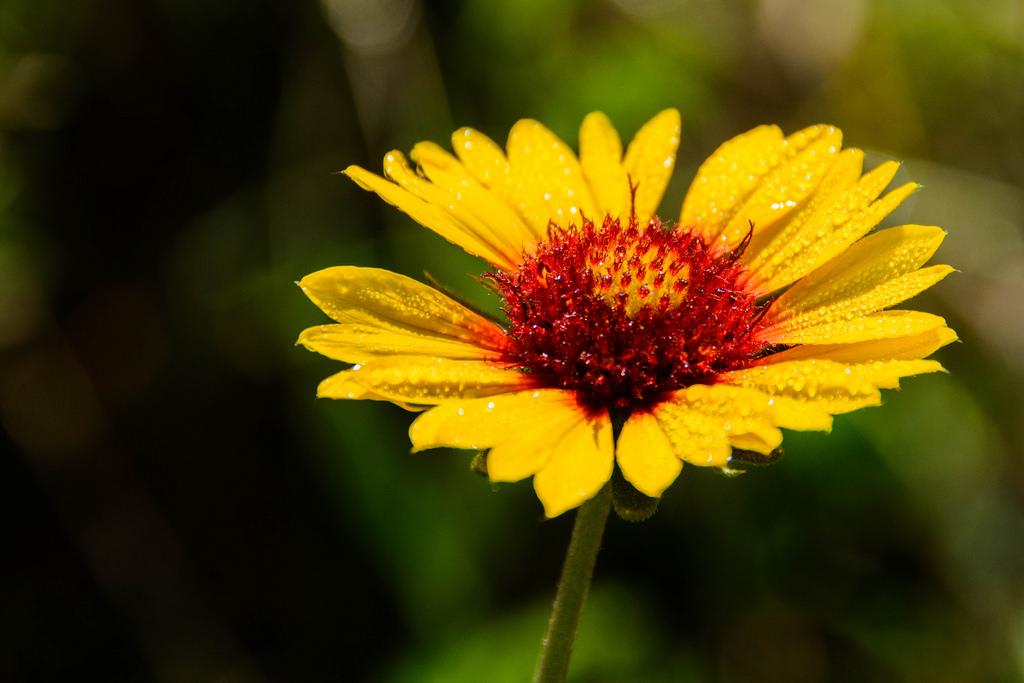 flower-2-deerfield