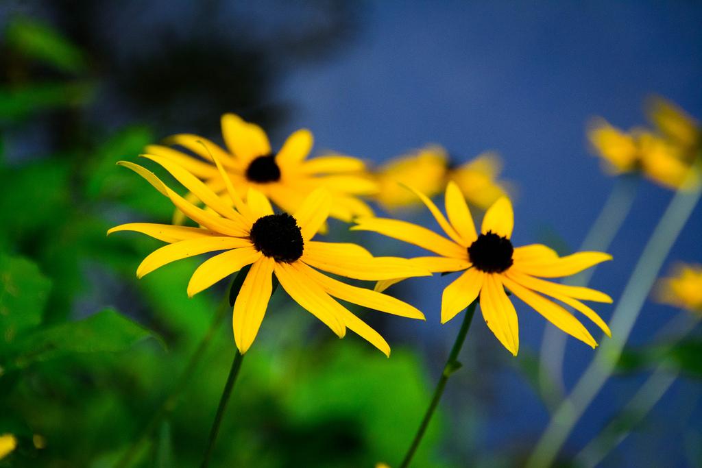 flowers-1-deerfield