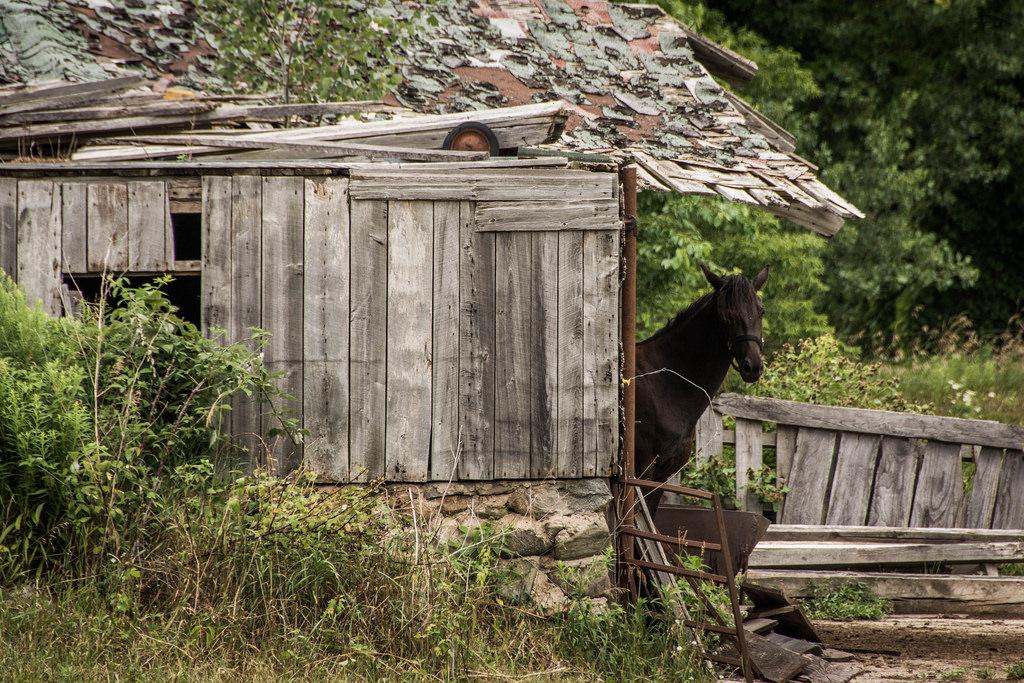 horse-old-barn