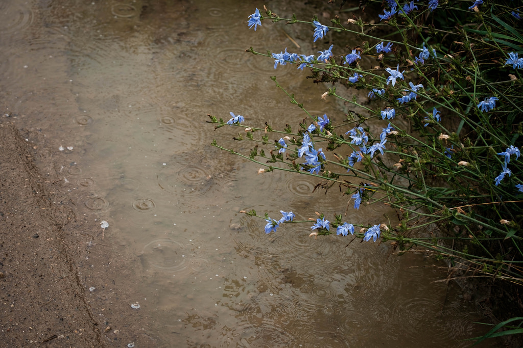 mud-puddle-flowers