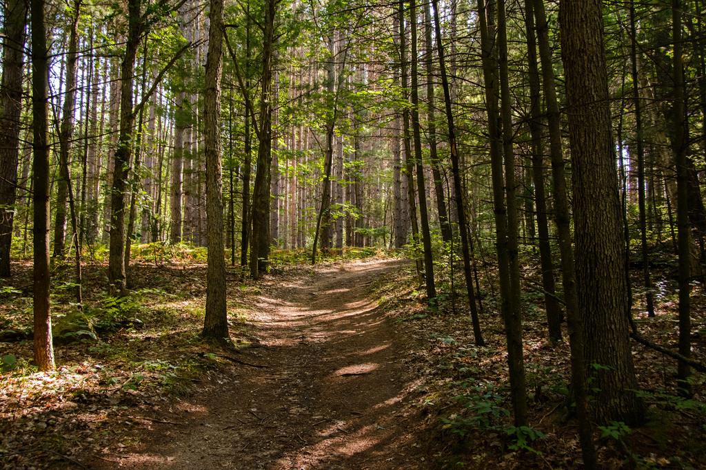 tall-trees-deerfield