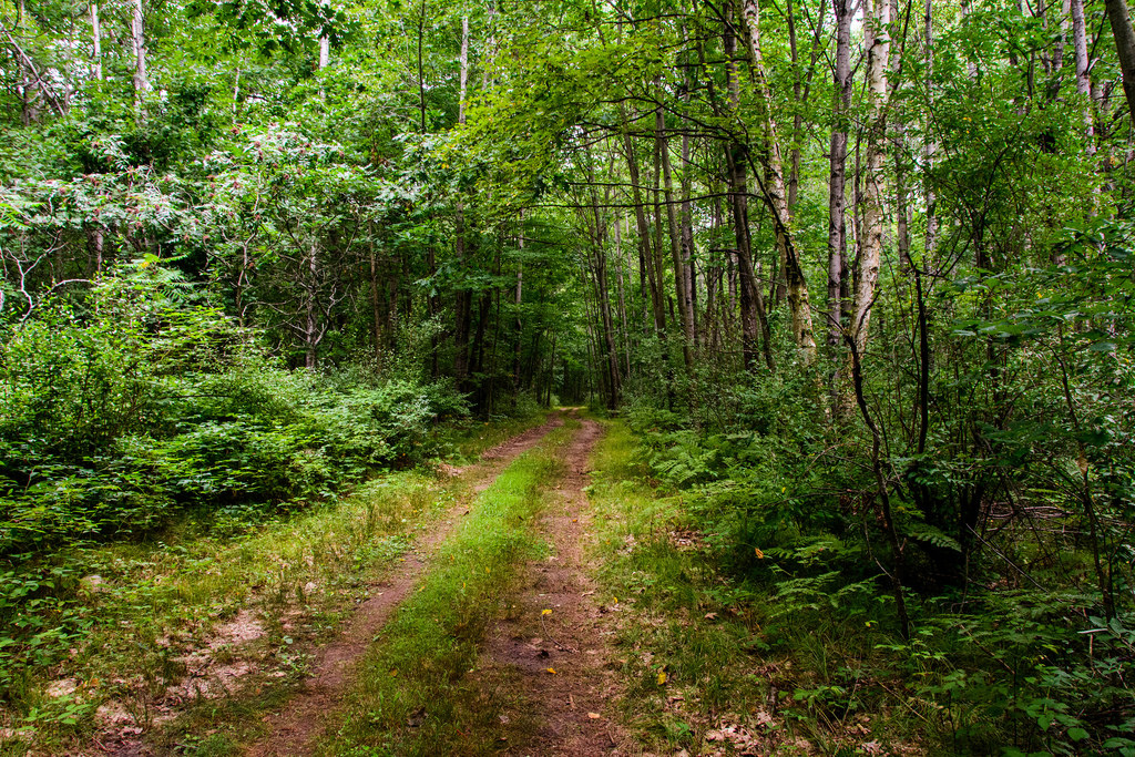 two-track-trail-deerfield