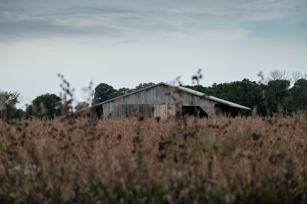 barn-beyond-soybeans