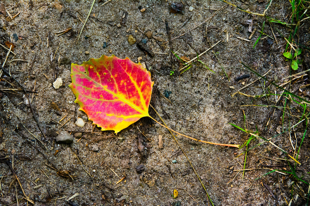 fall-leaf-no._1