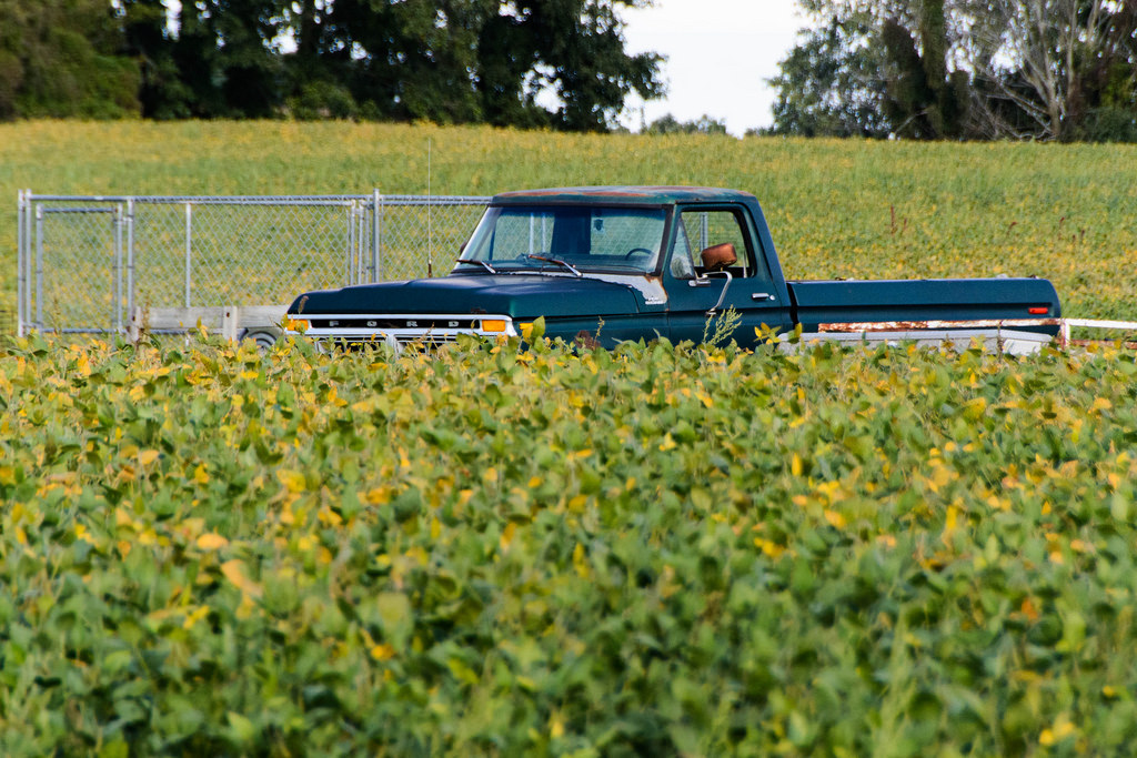 ford_truck_in_soy_beans
