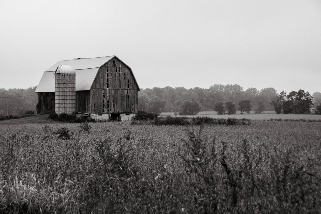 barn-bw-fog