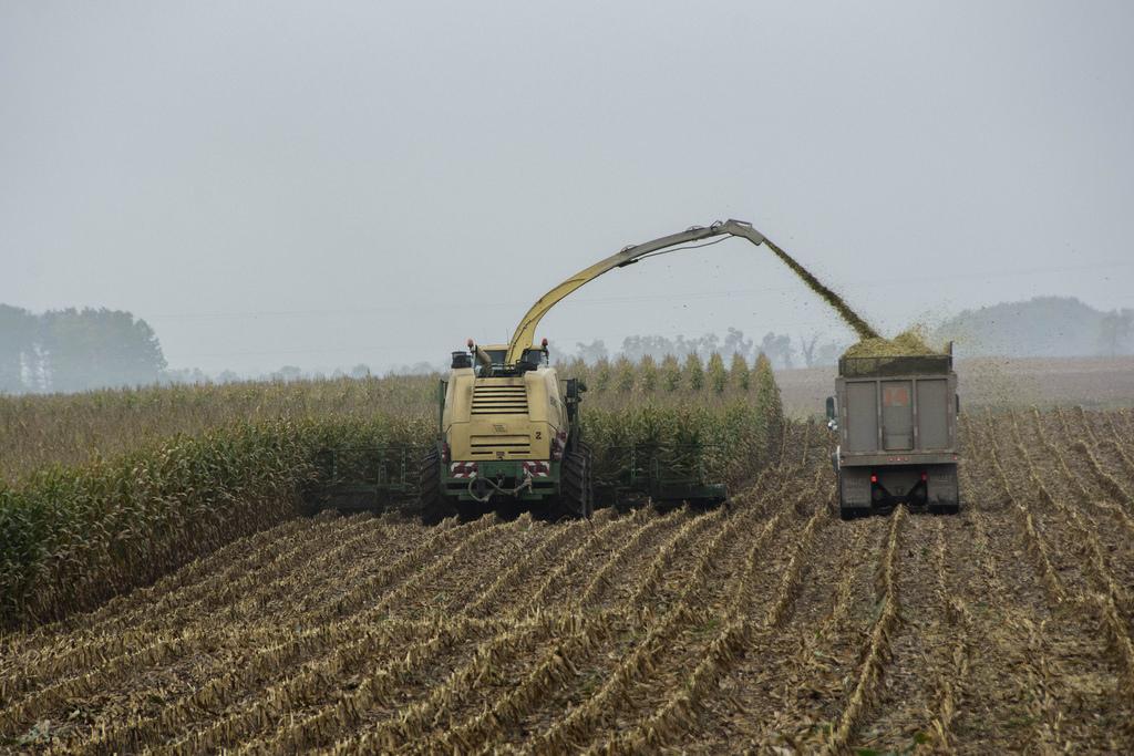 combine-truck-corn