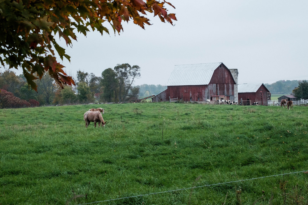 farm-scape