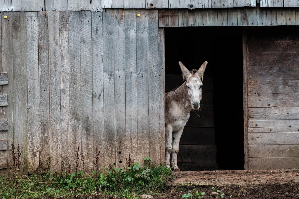 just-donkey