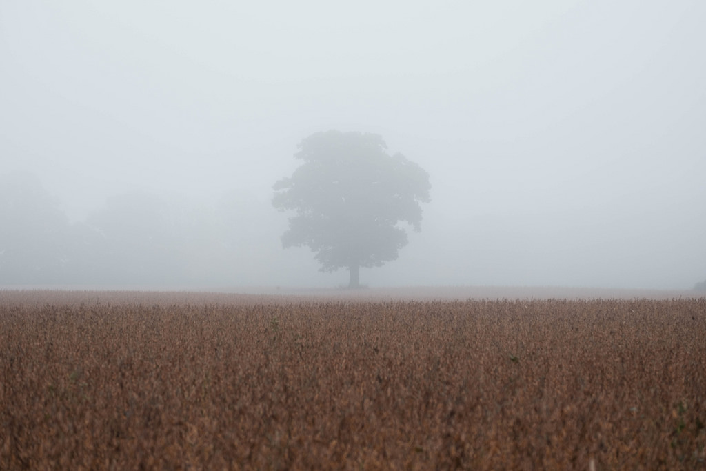 lone-tree-in-fog