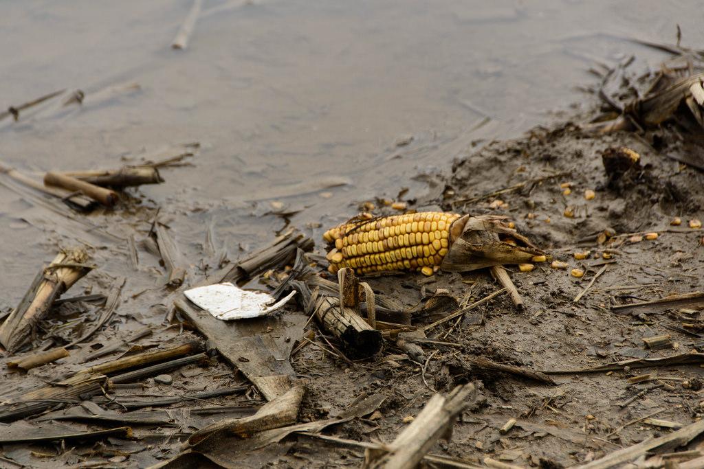 mud-and-corn