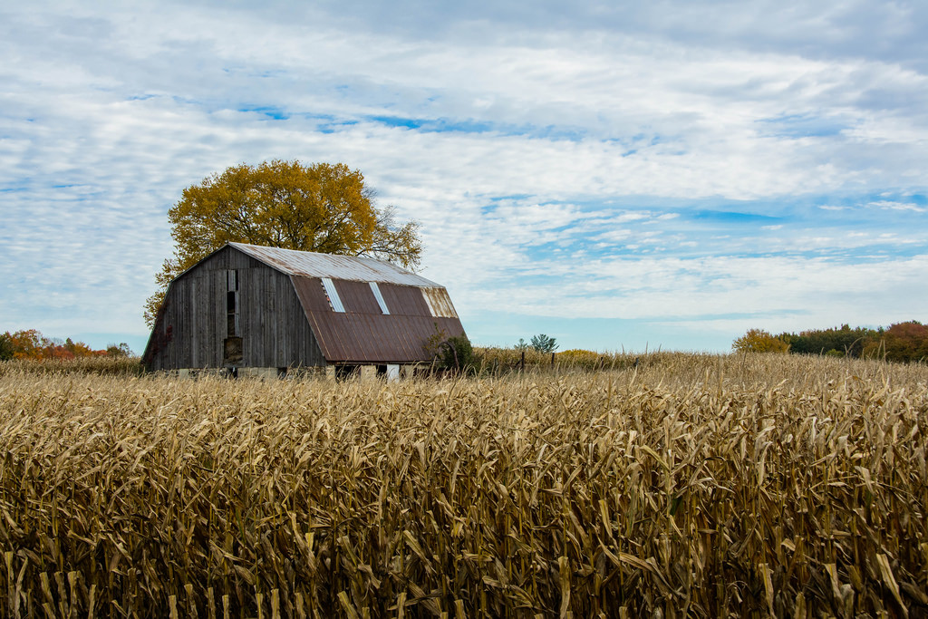 old-barn-corn-field
