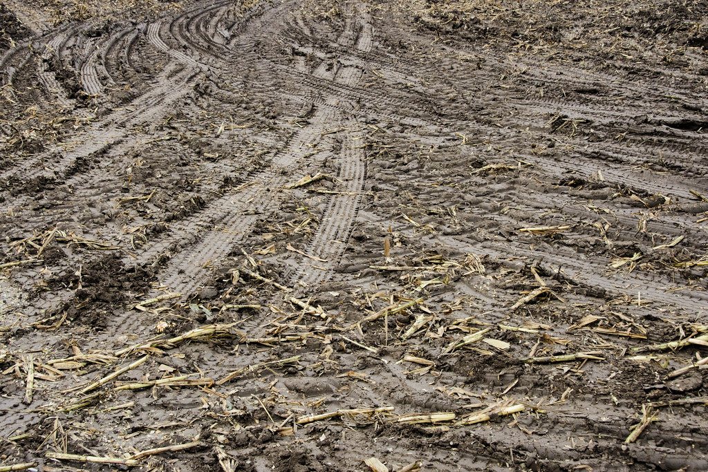 tire-marked-corn