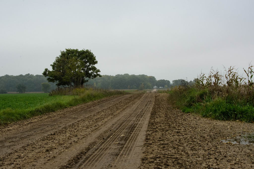 tire-marked-dirt-road