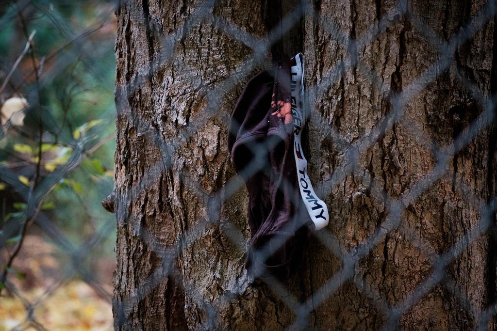 tommy-undies-on-tree