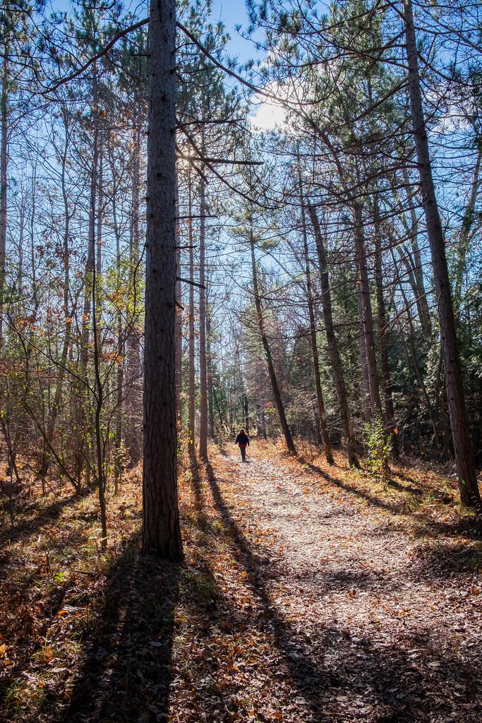 wifey_woods_walk