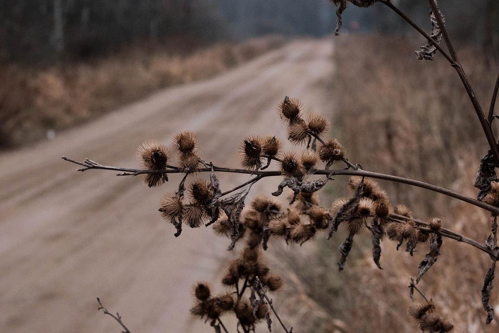 burr-road