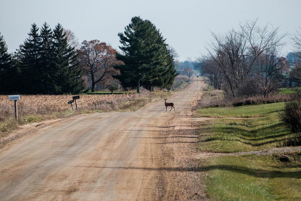deer-on-road