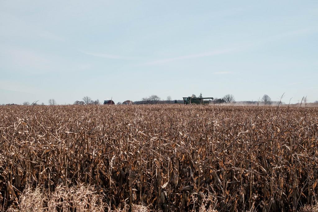 harvest-dust
