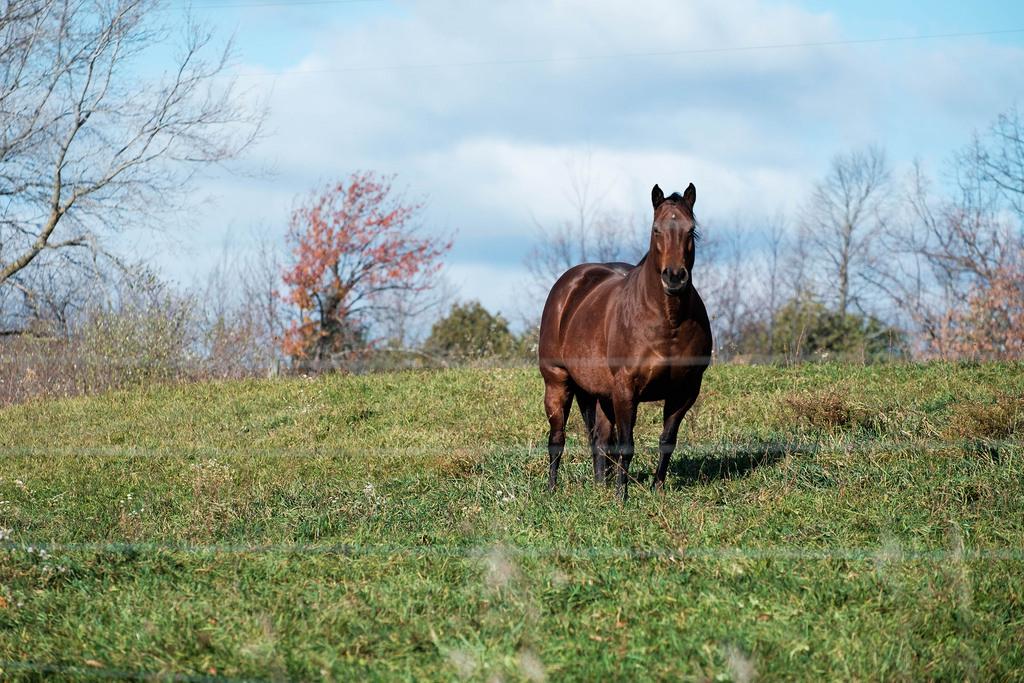 horse-in-sun