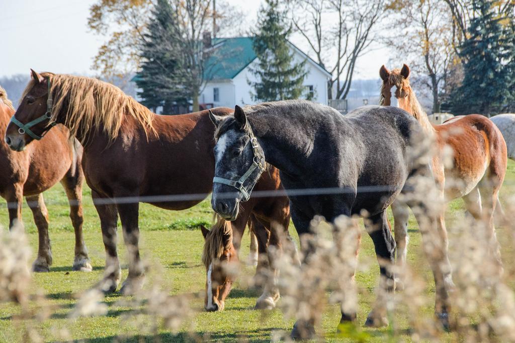 horses-sun