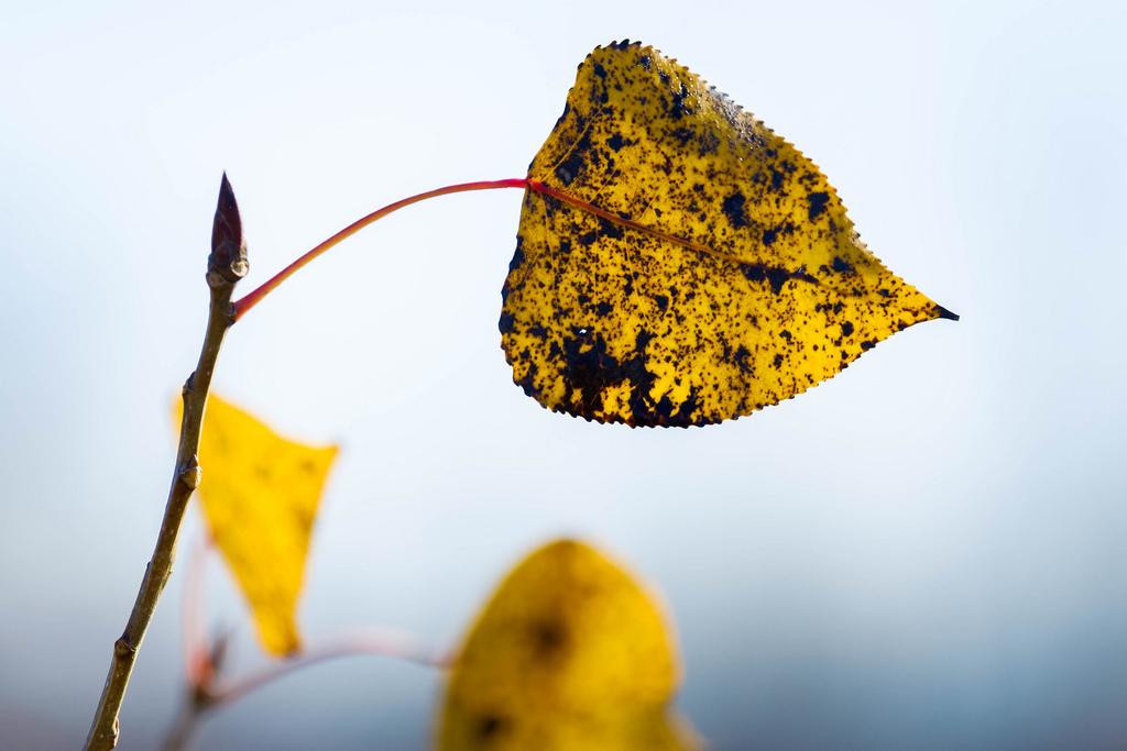 leaf_tree