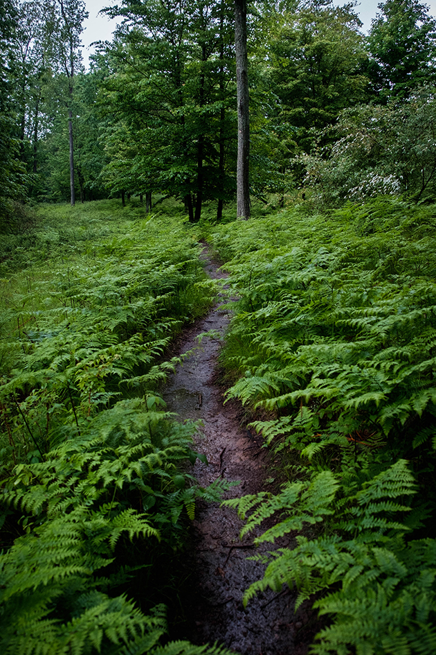 Trail and ferns.