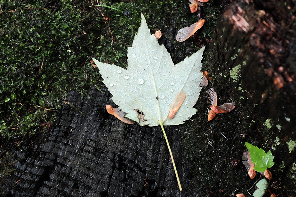 Wet leaf on log.