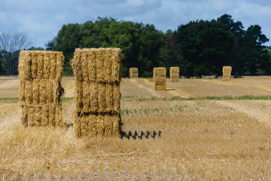 Rural Stonehenge